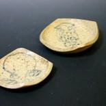 mollusk-plates